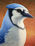 Portrait of a Bluejay