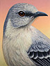 Portrait of a Mockingbird