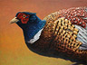 Portrait of a Pheasant