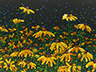 Floral Interpretation - Black-Eyed Susans