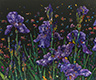 Floral Interpretation - Irises