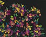 Floral Interpretation - Lantana Study
