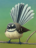 Portrait of a New Zealand Fantail
